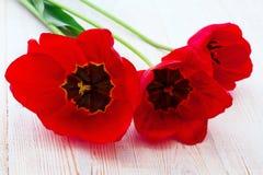 Tulipas vermelhas no fundo de madeira Imagem de Stock Royalty Free