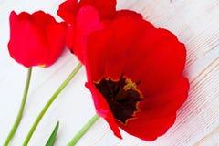 Tulipas vermelhas no fundo de madeira Imagens de Stock Royalty Free