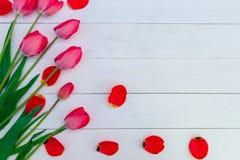 Tulipas vermelhas no fundo de madeira branco Vista superior Copie o espaço ano novo feliz 2007 Imagem de Stock Royalty Free