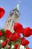 Tulipat le Parlement canadien. images stock