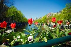 Tulipe à Amsterdam Photographie stock
