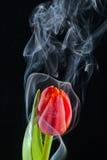 Tulipe avec de la fumée photographie stock libre de droits