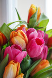 Tulipe Beau bouquet des tulipes Tulipes colorées Photo stock