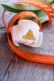 Tulipe blanche Photos libres de droits