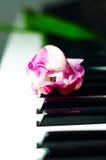 Tulipe blanche et rose sur des clés de piano Photographie stock libre de droits