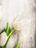 Tulipe blanche sur le vieux fond en bois gris Photos libres de droits