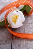 Tulipe comme fond de Pâques Image libre de droits