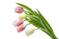Tulipe de bouquet Image libre de droits
