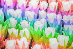 Tulipe de couleur d'arc-en-ciel Photos stock
