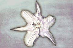 Tulipe de peinture ? l'huile illustration stock