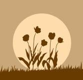 Tulipe de silhouette Photos libres de droits
