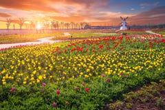 Tulipe et beau paysage avec le lever de soleil Images libres de droits