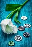 Tulipe et boutons blancs Photographie stock libre de droits