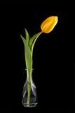 Tulipe jaune dans un vase Image libre de droits