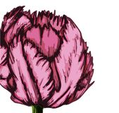 Tulipe pourpre grand background-01-01 illustration de vecteur