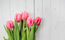 Tulipe Romance d'amour de ressort Photos stock