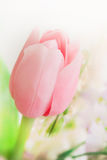 Tulipe rose Photo stock