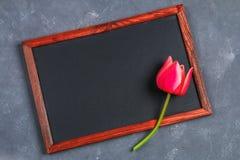 Tulipe rose sur un panneau concret gris de fond et de craie Photos libres de droits