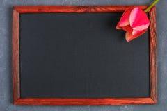 Tulipe rose sur un panneau concret gris de fond et de craie Images libres de droits