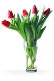 Tulipe rouge images libres de droits