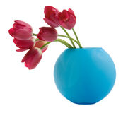 Tulipe rouge dans le vase bleu Photo stock