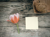 Tulipe sur le fond en bois de planches de grange foncée Image libre de droits