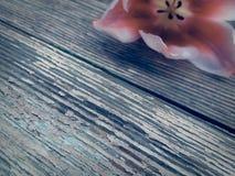 Tulipe sur le fond en bois de planches de grange foncée Image stock