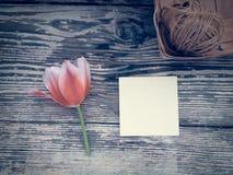 Tulipe sur le fond en bois de planches de grange foncée Photos libres de droits