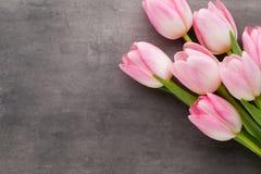 Tulipe sur le fond gris Photo libre de droits