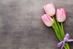 Tulipe sur le fond gris Images stock