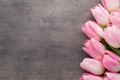 Tulipe sur le fond gris Photos libres de droits