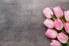 Tulipe sur le fond gris Photographie stock
