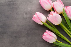 Tulipe sur le fond gris Photos stock