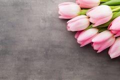 Tulipe sur le fond gris Image stock