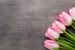 Tulipe sur le fond gris Photographie stock libre de droits