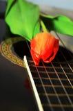 Tulipe, symbole de la Hollande Images libres de droits