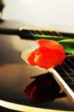 Tulipe, un symbole néerlandais Photos stock