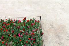 Tulipes à Paris Photo libre de droits