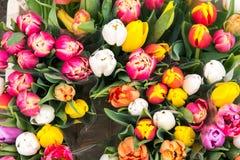 Tulipes à vendre à un markt Photo stock