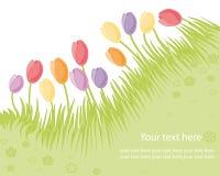 Tulipes illustration de vecteur