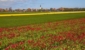 Tulipes image libre de droits