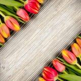 Tulipes Royaltyfri Bild