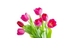 Tulipes photos stock