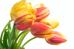 tulipes Photo stock