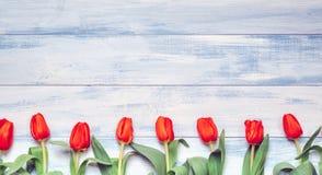 Tulipes Image stock
