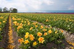 Tulipes au bas de la mer Photo libre de droits