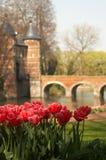 Tulipes au château images libres de droits