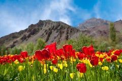 Tulipes au printemps image stock