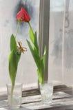 Tulipes avec le 8 mars Photo libre de droits
