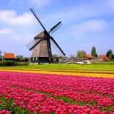 Tulipes avec les moulins à vent néerlandais, Pays-Bas Photographie stock libre de droits